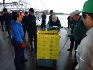 スルメイカ 魚市場に入荷